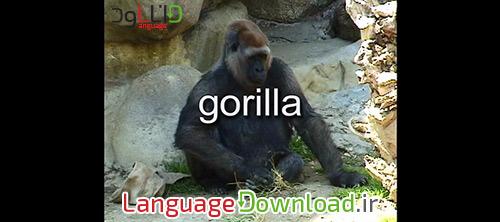 سایت آموزش زبان انگلیسی کودکان